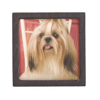 Shih-tzu dog gift box