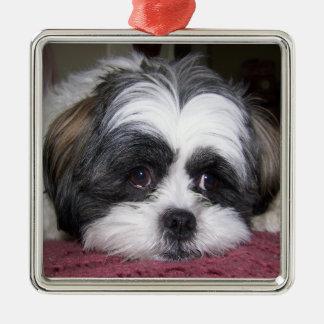 Shih Tzu Dog Photograph Ornament