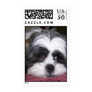 Shih Tzu Dog Postage