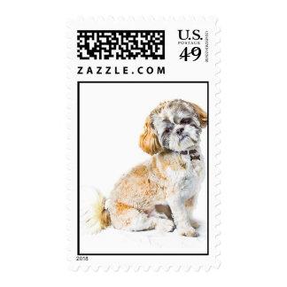 Shih Tzu Dog Postage Stamp