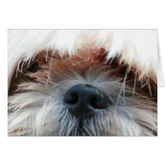 shih tzu dog puppy cute face picture gifts card