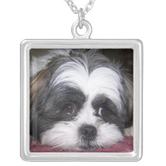 Shih Tzu Dog Silver Plated Necklace