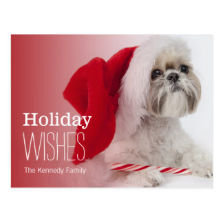 Shih Tzu dog wearing a Santa Claus hat Postcard