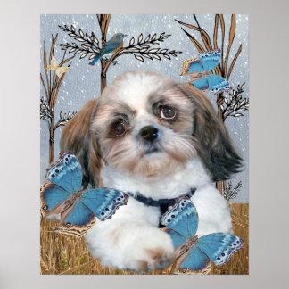 Shih Tzu e impresión de las mariposas Poster