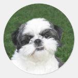 Shih Tzu face sticker