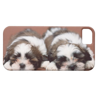 Shih Tzu iPhone 5 Cárcasa
