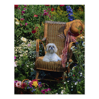 Shih Tzu Garden Poster