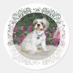 Shih Tzu in a Garden Setting Round Stickers