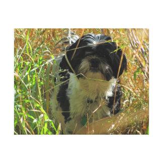 Shih Tzu Lion dog in tall grass Canvas Print