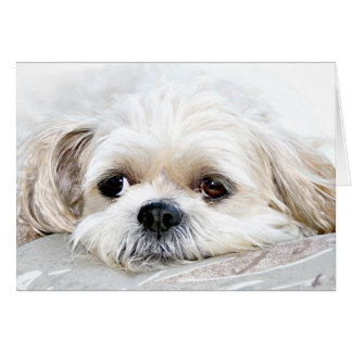 Shih Tzu miss you card