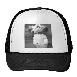 Shih Tzu Nap Trucker Hats