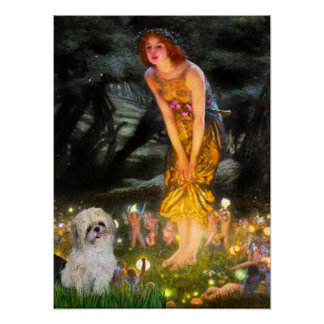 Shih Tzu P - Mid Eve Posters
