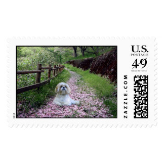 Shih Tzu Postage Purple Flowers