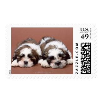 Shih Tzu Postage Stamp