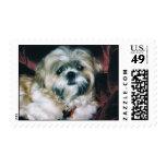 Shih Tzu Postage stamp-Bailey 1