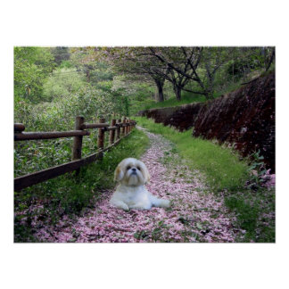 Shih Tzu Poster Purple Flowers