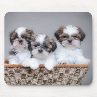 Shih Tzu puppies Mouse Pad
