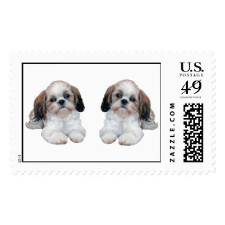 Shih Tzu Puppies Postage