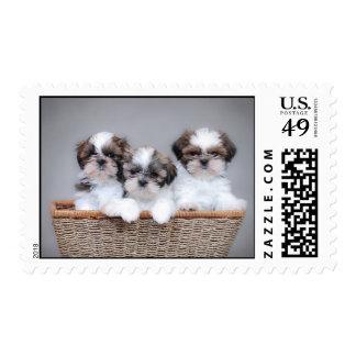 Shih Tzu puppies Stamp