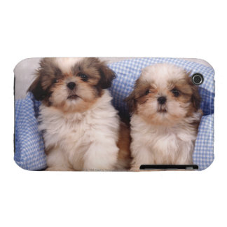 Shih Tzu puppies under a checked blanket iPhone 3 Cover