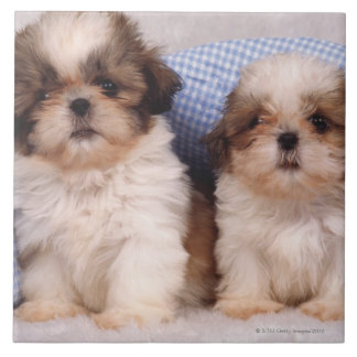 Shih Tzu puppies under a checked blanket Ceramic Tile