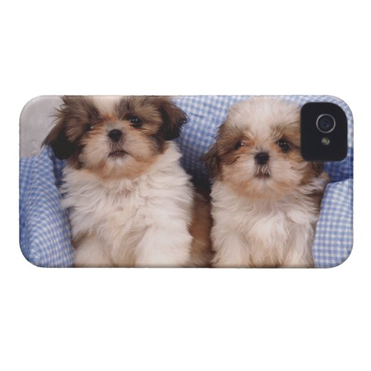 Shih Tzu puppies under a checked blanket iPhone 4 Case-Mate Case