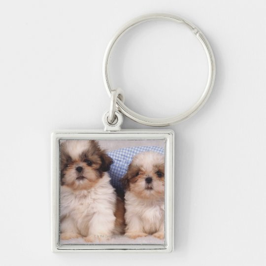 Shih Tzu puppies under a checked blanket Keychain