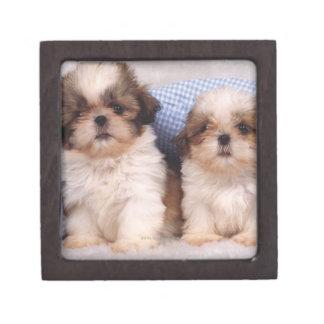 Shih Tzu puppies under a checked blanket Premium Trinket Box