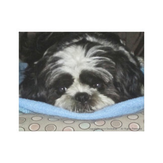 Shih Tzu Puppy Canvas Art to Warm Your Heart