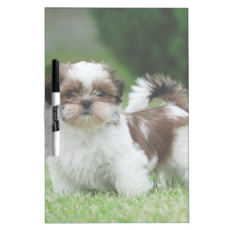 Shih tzu puppy dry erase board