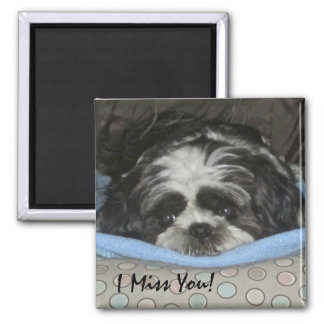 Shih Tzu Puppy Magnet - Order as is or Personalize