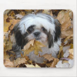 shih-tzu puppy mouse pad