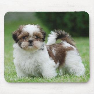 Shih tzu puppy mouse pad