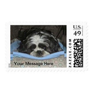 Shih Tzu Puppy Postage Stamp to Personalize
