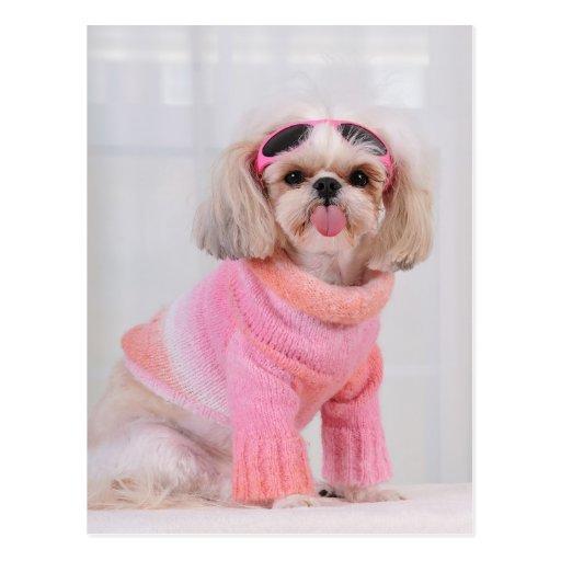 Shih Tzu Puppy - The Razz Post Card