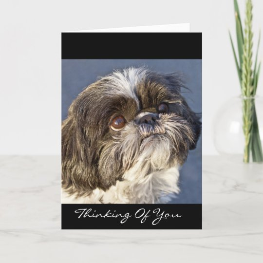 Shih tzu thinking of you greeting card verse zazzle shih tzu thinking of you greeting card verse m4hsunfo