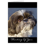 Shih Tzu Thinking of You Greeting Card - Verse