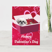 Shih tzu Valentine's Day Card, Dog Holiday Card