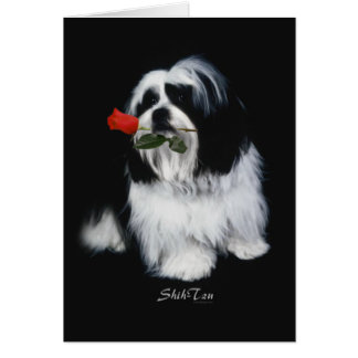 Shih Tzu With Rose Greeting Card