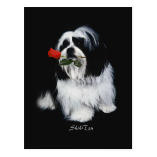 Shih Tzu With Rose Post Card