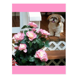 Shih Tzu with Spring Flowers Postcard