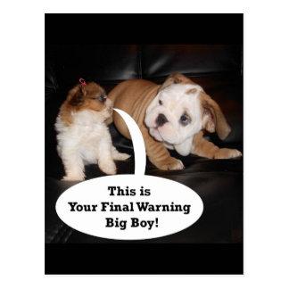Shih Tzu y dogo inglés Puppys Tarjeta Postal