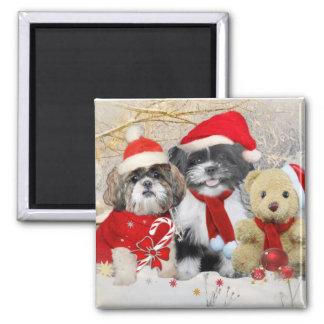 Shih Tzu y tarjeta de Navidad del oso de peluche Imanes De Nevera