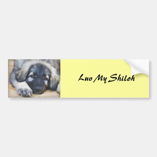 Shiloh Shepherd Bumper Sticker