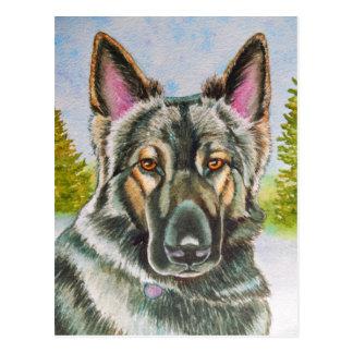 Shiloh Shepherd Postcard
