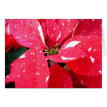 Shimmer Star Surprise Poinsettia Holiday Floral Card