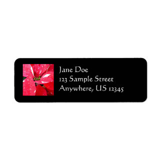 Shimmer Star Surprise Poinsettia Holiday Floral Label