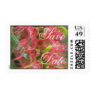 Shimmering bottlebrush postage stamp