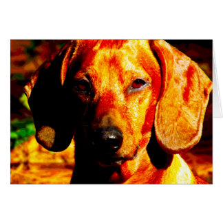 Shimmering Glowing Dachshund Face Closeup Card