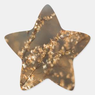 Shimmering Golden Prairie Grass Star Sticker